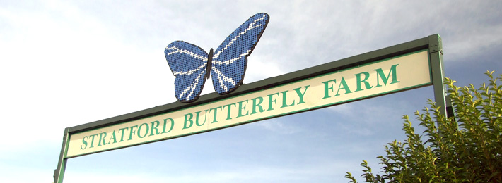 Butterfly Farm, Stratford upon Avon