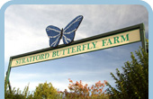 The Butterfly Farm, Stratford upon Avon