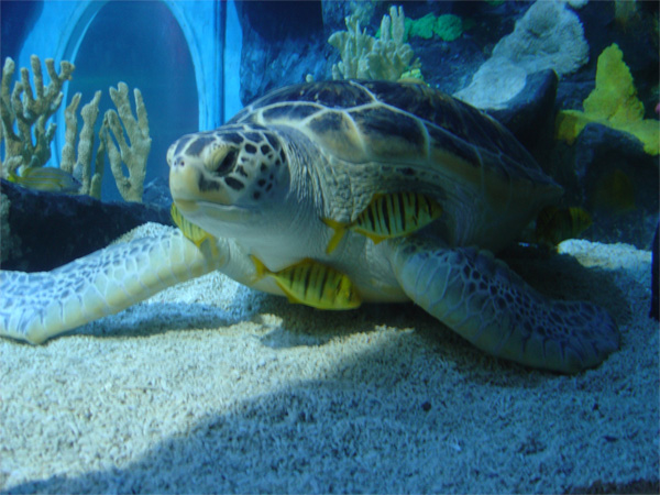 The National Sea Life Centre in Birmingham opens a window into the ...